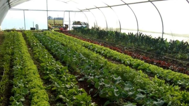 Horticultura 1